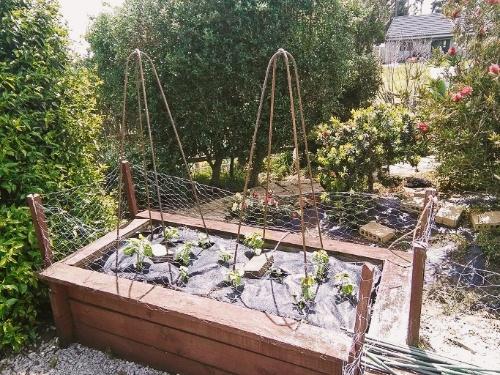 Welded rebar vegetable garden plant supports